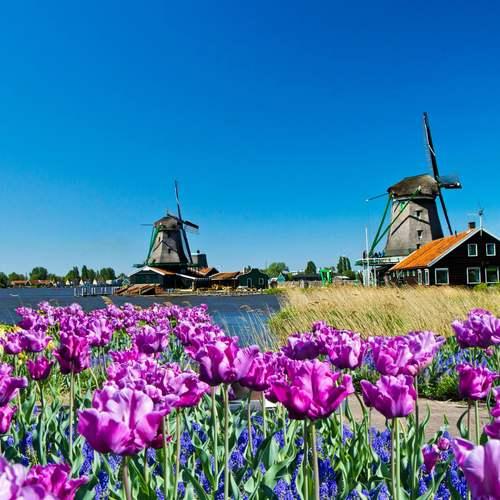 หมู่บ้านกังหันลมซานสคันส์ ทัวร์เนเธอร์แลนด์