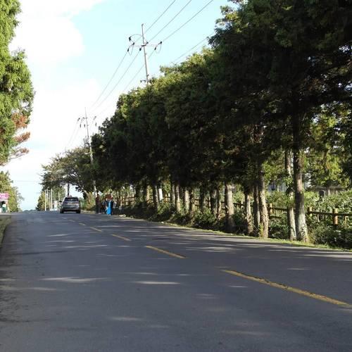 ทัวร์เกาหลี เจจู ถนนพิศวง / ด๊อกเกบิ