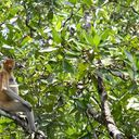 ทัวร์บรูไน บรูไน River Safari brunei