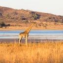 ทัวร์แอฟริกาใต้ แอฟริกาใต้ อุทยานสัตว์ป่าขุนเขาพีลันเนสเบิร์ก หรือ พีลาเนสเบิร์ก
