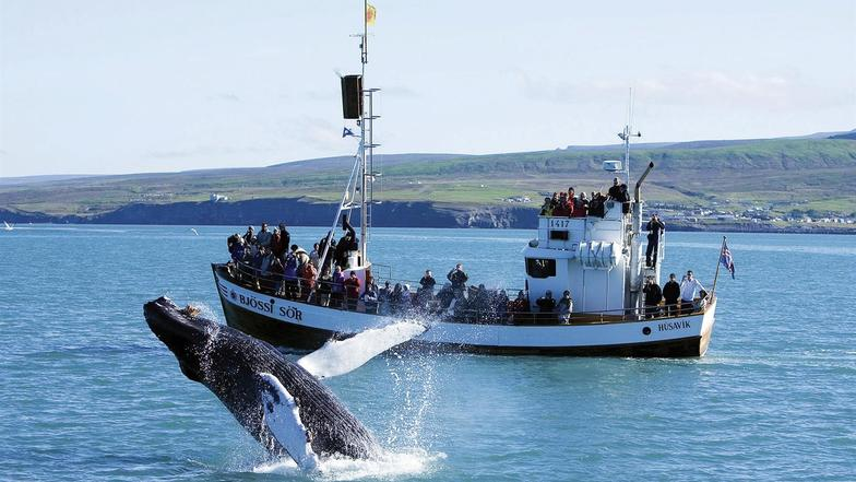 ล่องเรือชมปลาวาฬไอซ์แลนด์