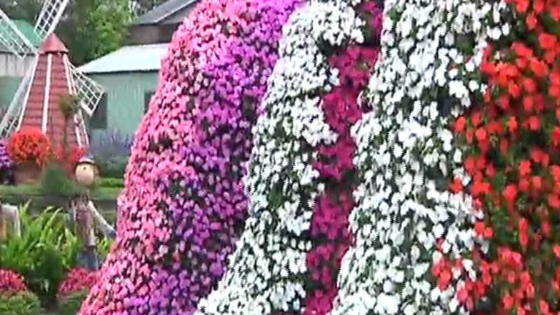 ฟาร์มดอกไม้จงเซ่อ