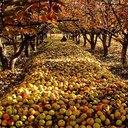 ทัวร์เกาหลี กรุงโซล สวนผลไม้ตามฤดูกาล