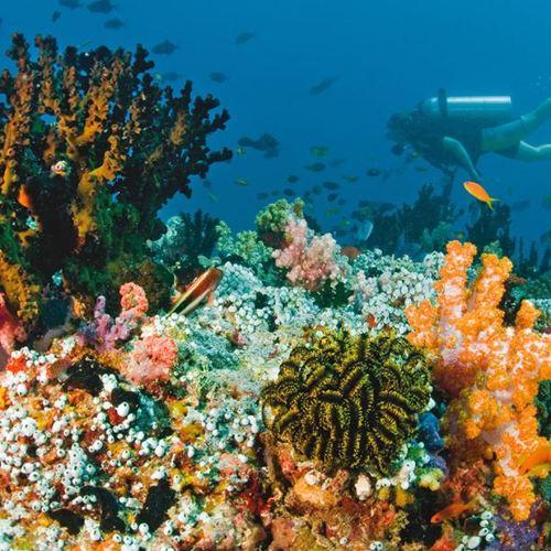 ทัวร์มัลดีฟส์ มัลดีฟส์ ดำน้ำดูปะการัง มัลดีฟ