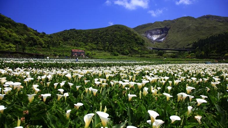 อุทยานแห่งชาติหยางหมิงซาน