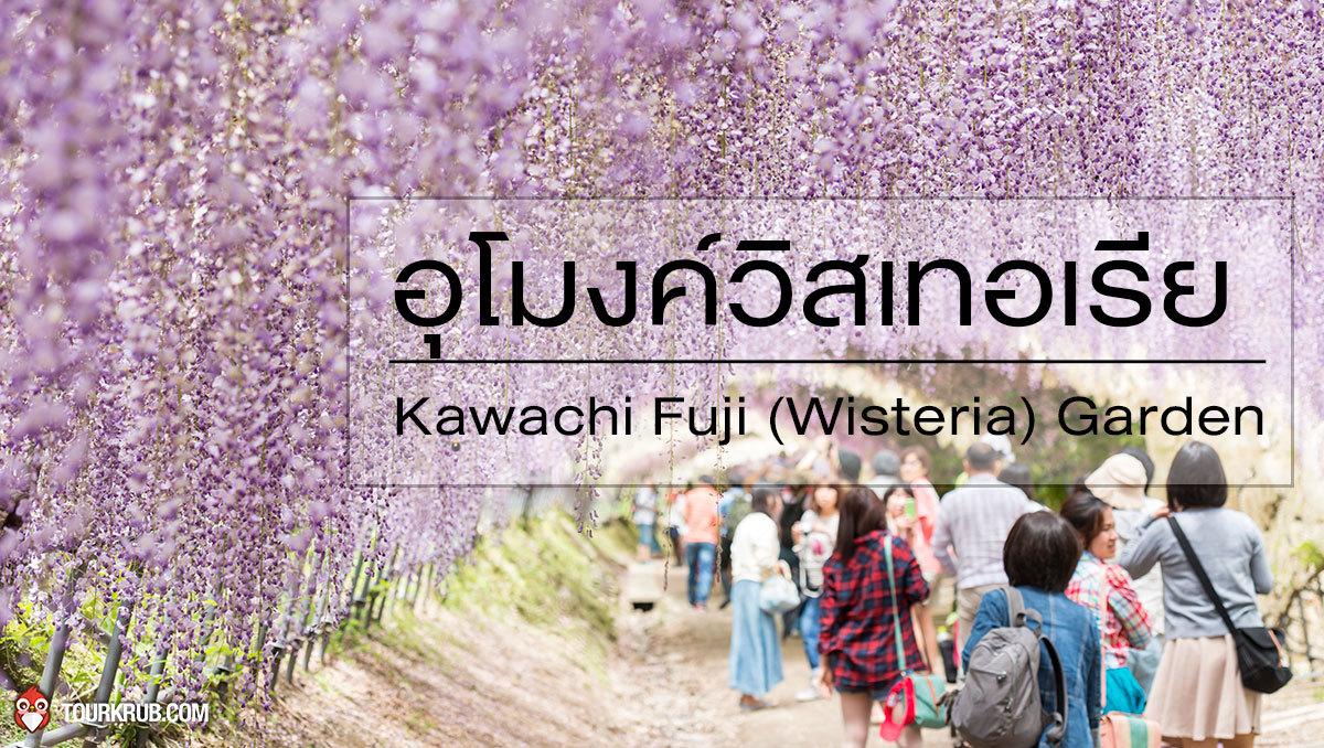 kawachi fuji  wisteria  garden  1