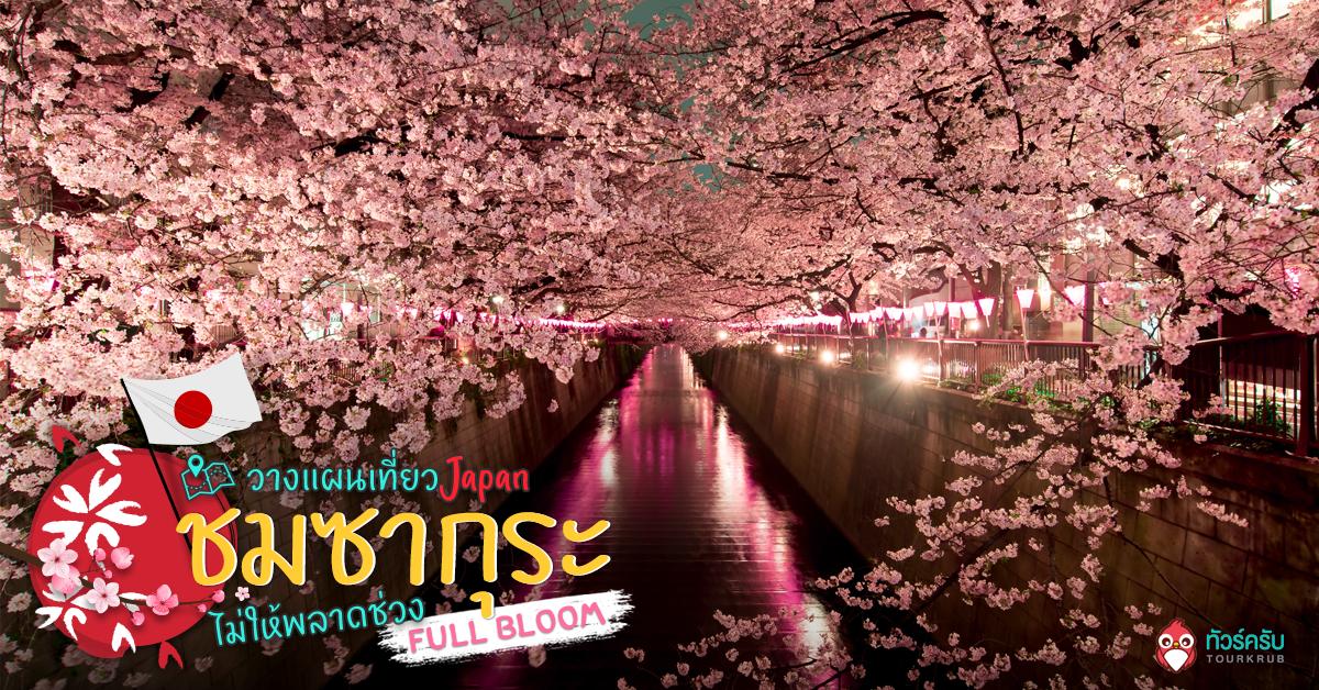 วางแผนเที่ยวชมซากุระอย่างไร ไม่ให้พลาดช่วง Full Bloom ?