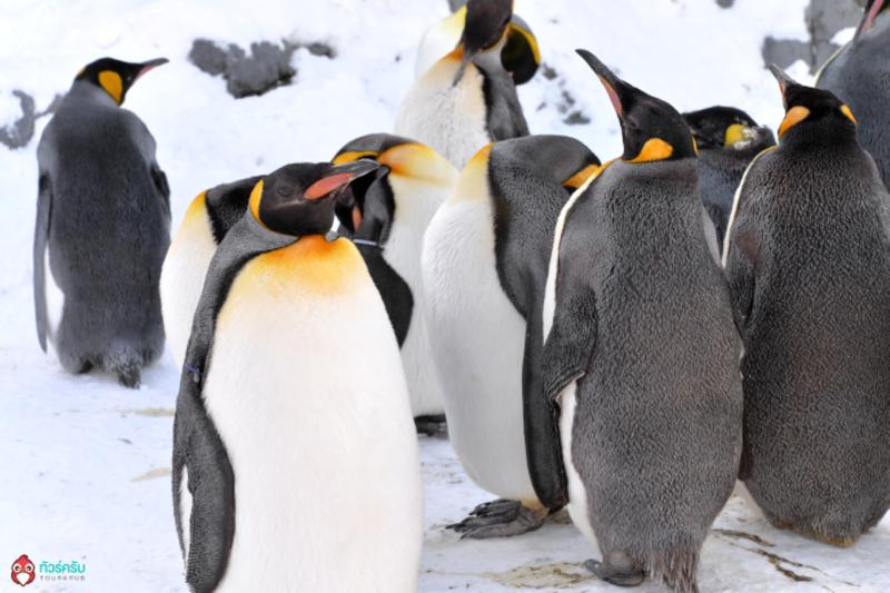 King-Penguin-Colony