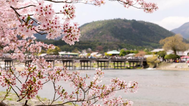 ทัวร์ญี่ปุ่น โอซาก้า ทาคายาม่า เกียวโต 5 วัน 3 คืน สะพานโทเกทสึเคียว หมู่บ้านชิราคาวะโกะ ชมซากุระบริเวณแม่น้ำซาไก บิน ไทยแอร์เอเชียเอกซ์