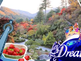 ทัวร์เกาหลี โซล 5วัน 3คืน นามิ พักสกีรีสอร์ท  บินLJ กรุงโซล ทัวร์สกีรีสอร์ท Top seller ทัวร์ต้อนรับวันปีใหม่