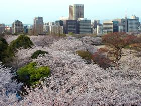 ทัวร์ญี่ปุ่น โตเกียว โอซาก้า  6 วัน 3 คืน ชมซากุระ ณ สวนสาธารณะนารา บิน XJ  โตเกียว โอซาก้า ทัวร์ญี่ปุ่น ราคาถูก ทัวร์โอซาก้า / ทัวร์ญี่ปุ่น โตเกียว โอซาก้า