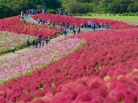 ทัวร์ญี่ปุ่น โตเกียว  4 วัน 3 คืน สวนดอกไม้ ฮิตาชิ ซีไซด์ พาร์ค  บิน XJ โตเกียว ทัวร์สงกรานต์ ทัวร์ราคาสุดคุ้ม