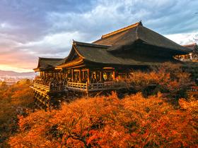 ทัวร์ญี่ปุ่น โตเกียว  โอซาก้า  6 วัน 3 คืน  ชมสวนดอกไม้ ฮามามัทสึ ฟลาวเวอร์ ปาร์ค บิน XJ  โตเกียว โอซาก้า ทัวร์ญี่ปุ่น ราคาถูก ทัวร์โอซาก้า / ทัวร์ญี่ปุ่น โตเกียว โอซาก้า ทัวร์ราคาสุดคุ้ม ทัวร์ต้อนรับปิดเทอม