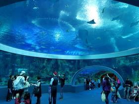 ทัวร์มาเก๊า จูไห่ 3 วัน 2 คืน พิพิธภัณฑ์สัตว์น้ำ เวเนเชี่ยน  บิน NX มาเก๊า จูไห่ แพ็คเกจทัวร์โปรโมชั่น เที่ยวช่วงปิดเทอมฤดูร้อน