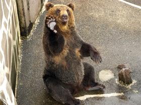 ทัวร์ญี่ปุ่น ฮอกไกโด 6 วัน 4 คืน ขึ้นกระเช้าไฟฟ้าชมภูเขาไฟอุสึ ฟาร์มหมีสีน้ำตาล บิน TG ฮอกไกโด แพ็คเกจทัวร์ลดราคา  เที่ยวช่วงปิดเทอมฤดูร้อน ทัวร์ฮอกไกโด
