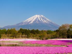 ทัวร์ญี่ปุ่น โตเกียว 5 วัน 3 คืน ภูเขาฟูจิชั้น 5  ทุ่งดอกพิงค์มอส  ชมซากุระ  บิน TZ โตเกียว ทัวร์วันแรงงาน ทัวร์ชมดอกซากุระ  เที่ยววันหยุด ฉัตรมงคล  เที่ยววันหยุด วิสาขบูชา