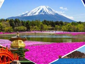 ทัวร์ญี่ปุ่น โอซาก้า โตเกียว  5วัน 4 คืน ชมทุ่งพิงค์มอส หรือหมู่บ้านน้ำใส และ เจแปน แอลป์  บิน TZ โอซาก้า โตเกียว เที่ยวช่วงปิดเทอมฤดูร้อน ทัวร์ชมดอกซากุระ  ทัวร์ญี่ปุ่น ราคาถูก ทัวร์โอซาก้า / ทัวร์ญี่ปุ่น โตเกียว โอซาก้า ทัวร์ราคาสุดคุ้ม