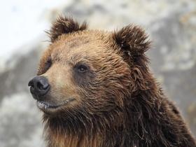 ทัวร์ญี่ปุ่น ฮอกไกโด 6 วัน 4 คืน นิกเซ่มารีนพาร์ค ฟาร์มหมีโนโบริเบทสึ บิน TG ฮอกไกโด ทัวร์สงกรานต์ ทัวร์ฮอกไกโด