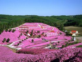 ทัวร์ญี่ปุ่น โตเกียว โอซาก้า 6 วัน 3 คืน  ทุ่งดอกพิงค์มอส  ล่องเรือทะเลสาบอาชิ บิน XJ โตเกียว โอซาก้า เที่ยววันหยุด ฉัตรมงคล  เที่ยววันหยุด วิสาขบูชา ทัวร์โอซาก้า / ทัวร์ญี่ปุ่น โตเกียว โอซาก้า
