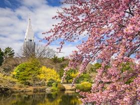 ทัวร์ญี่ปุ่น โตเกียว 6 วัน 4 คืน ชมซากุระ และดอกนาโนะฮานะ   ชิมสตรอเบอร์รี่สดๆจาก ไร่  บิน XW โตเกียว ทัวร์ชมดอกซากุระ
