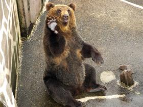 ทัวร์ญี่ปุ่น ฮอกไกโด 7 วัน 5 คืน ชมวิวยอดเขาฮาโกดาเตะ (นั่งกระเช้า) ฟาร์มหมีโชวะชินซัง บิน TG ฮอกไกโด ทัวร์สงกรานต์
