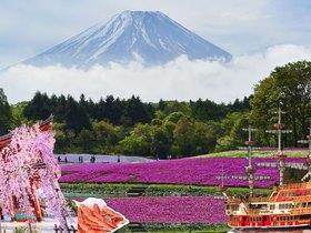 ทัวร์ญี่ปุ่น โตเกียว 5 วัน 3 คืน หุบเขาโอวาคุดานิ ภูเขาไฟฟูจิชั้น 5 [ขึ้นอยู่กับสภาพอากาศ] ชมชิบะซากุระ[พิ้งค์มอส]  บิน XJ โตเกียว ทัวร์ชมดอกซากุระ  ทัวร์ญี่ปุ่น ราคาถูก ทัวร์ราคาสุดคุ้ม