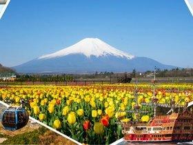 ทัวร์ญี่ปุ่น โตเกียว  ฟูจิ  5วัน 3คืน สวนดอกไม้  Yamanakako Flower Park  ขึ้นฟูจิชั้น5 บิน TZ   โตเกียว แพ็คเกจทัวร์ขายดี Top seller ทัวร์ วันแม่ ทัวร์ญี่ปุ่น ราคาถูก ทัวร์ราคาสุดคุ้ม