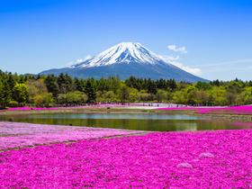 ทัวร์ญี่ปุ่น โตเกียว 6 วัน 4 คืน ภูเขาไฟฟูจิ ชมทุ่งดอกพิงค์มอส  บิน  XJ  โตเกียว เที่ยววันหยุด ฉัตรมงคล  ทัวร์ชมดอกซากุระ  เที่ยววันหยุด วิสาขบูชา