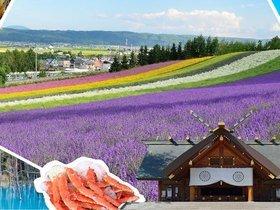 ทัวร์ญี่ปุ่น ฮอกไกโด 5 วัน 3 คืน โทมิตะฟาร์ม ชมทุ่งลาเวนเดอร์ บิน  TG  ฮอกไกโด ทัวร์ฮอกไกโด