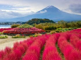 ทัวร์ญี่ปุ่น โอซาก้า โตเกียว 6 วัน 4 คืน ชมความงามภูเขาไฟฟูจิ ชั้น 5 ชมทุ่งดอกลิลลี่ หรือ ชมลาน ต้นโคเกีย บิน TG โอซาก้า โตเกียว ทัวร์ วันแม่ ทัวร์ Premium ทัวร์ราคาสุดคุ้ม