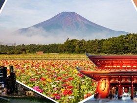 ทัวร์ญี่ปุ่น โตเกียว  5  วัน 3 คืน สวนดอกไม้ฮานะโนะมิยาโกะ บิน TZ โตเกียว แพ็คเกจทัวร์ขายดี ทัวร์ วันแม่ ทัวร์ญี่ปุ่น ราคาถูก ทัวร์ราคาสุดคุ้ม