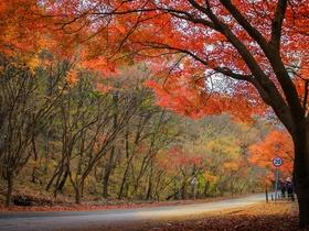 ทัวร์เกาหลี กรุงโซล 5 วัน 3 คืน สโตนเฮนจ์เกาหลี  เที่ยว 3 เกาะมหัศจรรย์   บิน KE กรุงโซล วันที่ 13 ตุลาคม เนื่องในวันคล้ายวันสวรรคต พระบาทสมเด็จพระปรมินทรมหาภูมิพลอดุลยเดช วันหยุดเทศกาล เฉลิมพระชนมพรรษารัฐกาลที่ 10 ทัวร์ วันแม่ วันอาสาฬหบูชา / วันเข้าพรรษา ทัวร์เกาหลี ราคาถูก ทัวร์ราคาสุดคุ้ม