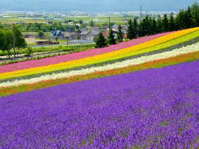 ทัวร์ญี่ปุ่น ฮอกไกโด 6 วัน 4 คืน สวนชิคิไซโนะโอกะ ชมทุ่งดอกลาเวนเดอร์ บิน TG ฮอกไกโด