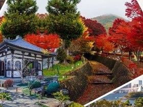 ทัวร์ญี่ปุ่น โตเกียว 5 วัน 3 คืน  ภูเขาฟูจิชั้น 5 ชมใบไม้เปลี่ยนสี  ล่องเรือโจรสลัด  บิน  TZ โตเกียว วันที่ 13 ตุลาคม เนื่องในวันคล้ายวันสวรรคต พระบาทสมเด็จพระปรมินทรมหาภูมิพลอดุลยเดช ทัวร์ใบไม้เปลี่ยนสี เที่ยววันหยุด ปิยมหาราช