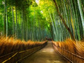 ทัวร์ญี่ปุ่น โอซาก้า เกียวโต 5 วัน 3 คืน  ปราสาทโอซาก้า ป่าไผ่ บิน XJ โอซาก้า เกียวโต วันหยุดเทศกาล เฉลิมพระชนมพรรษารัฐกาลที่ 10 วันอาสาฬหบูชา / วันเข้าพรรษา ทัวร์โอซาก้า / ทัวร์ญี่ปุ่น โตเกียว โอซาก้า