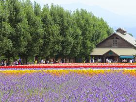 ทัวร์ญี่ปุ่น โตเกียว 5 วัน 3 คืน ชมดอกลาเวนเดอร์ ภูเขาไฟฟูจิ บิน XJ โตเกียว Top seller เทศกาลลาเวนเดอร์ ทัวร์ญี่ปุ่น ราคาถูก ทัวร์โอซาก้า / ทัวร์ญี่ปุ่น โตเกียว โอซาก้า ทัวร์ราคาสุดคุ้ม