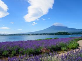 ทัวร์ญี่ปุ่น โตเกียว 5 วัน 3 คืน  ชมดอกลาเวนเดอร์  พระใหญ่ไดบุทสึ  บิน TZ โตเกียว เทศกาลลาเวนเดอร์ วันอาสาฬหบูชา / วันเข้าพรรษา ทัวร์ญี่ปุ่น ราคาถูก ทัวร์ราคาสุดคุ้ม
