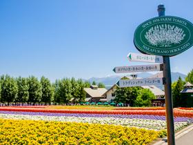ทัวร์ญี่ปุ่น ฮอกไกโด ซัปโปโร   6 วัน 4 คืน  สวนดอกไม้ 2 สวน โทมิตะฟาร์มและสวนชิกิไซ ฮิลล์  บิน TG  ฮอกไกโด เทศกาลลาเวนเดอร์ ทัวร์ญี่ปุ่น ราคาถูก ทัวร์ Premium ทัวร์ฮอกไกโด ทัวร์ราคาสุดคุ้ม