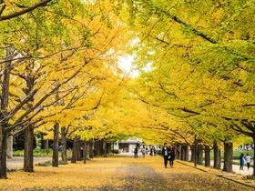 ทัวร์ญี่ปุ่น โตเกียว 5 วัน 3 คืน  ใบไม้เปลี่ยนสี ภูเขาไฟฟูจิ ชั้น 5  บิน TZ  โตเกียว Top seller ทัวร์ใบไม้เปลี่ยนสี เที่ยววันหยุด ปิยมหาราช ทัวร์ราคาสุดคุ้ม