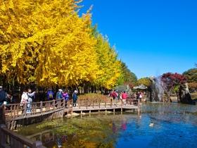 ทัวร์เกาหลี กรุงโซล 5 วัน 3 คืน ใบไม้เปลี่ยนสี สวนสนุกเอเวอร์แลนด์  บิน XJ  กรุงโซล วันที่ 13 ตุลาคม เนื่องในวันคล้ายวันสวรรคต พระบาทสมเด็จพระปรมินทรมหาภูมิพลอดุลยเดช Top seller เที่ยววันหยุด ปิยมหาราช ทัวร์ราคาสุดคุ้ม