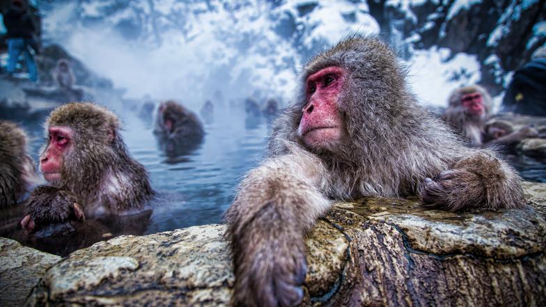 ทัวร์ญี่ปุ่น นาโกย่า 6 วัน 3 คืน หมู่บ้านชิราคาวะโกะ ลิงแช่ออนเซ็น** ฮากุบะสกี  บิน การบินไทย