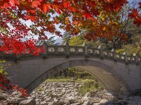 ทัวร์เกาหลี กรุงโซล  5 วัน  3 คืน ฤดูใบไม้เปลี่ยนสี  ณ อุทยานซอรัคซาน บิน LJ  กรุงโซล
