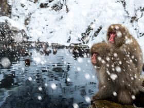 ทัวร์ญี่ปุ่น โอซาก้า ทาคายาม่า นากาโน่  6 วัน 4 คืน เทศกาลแสงสี Nabana no Sato Winter Illumination ลิงแช่ออนเซ็น ตะลุยหิมะ 'เล่นสกีรีสอร์ท' บิน XJ โอซาก้า ทาคายาม่า
