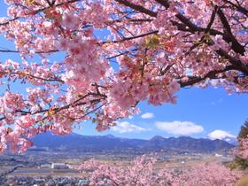 ทัวร์ญี่ปุ่น โตเกียว โอซาก้า 6 วัน 4 คืน เทศกาลดอกซากุระ ณ เมืองมาซึดะ  อิเคโนะไทระ 'สกีรีสอร์ท บิน TG  โตเกียว โอซาก้า ทัวร์ญี่ปุ่น ระดับพรีเมี่ยม