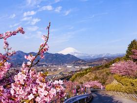 ทัวร์ญี่ปุ่น โตเกียว 5 วัน 3 คืน เทศกาลซากุระ ณ เมืองคาวาสึ  ฟูจิเท็น สกีรีสอร์ท บิน XJ โตเกียว