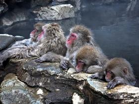 ทัวร์ญี่ปุ่น นาโกย่า ทาคายาม่า 5 วัน 3 คืน เทศกาล NABANA NO SATO  ลิงแช่ออนเซ็น ฮากุบะสกี บิน JL นาโกย่า ทาคายาม่า
