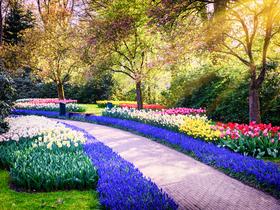 ทัวร์ยุโรปฝรั่งเศส เบลเยี่ยม เนเธอร์แลนด์ 8 วัน 5 คืน เทศกาลดอกไม้ที่สวนเคอเคนฮอฟ บิน EK เบลเยี่ยม เนเธอร์แลนด์ ฝรั่งเศส