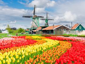 ทัวร์ยุโรปเยอรมัน เนเธอร์แลนด์ เบลเยี่ยม ลักเซมเบริก์  7 วัน 5 คืน ชมงานเทศกาลดอกทิวลิป KEUKENHOF  บิน BR เยอรมัน เนเธอร์แลนด์ เบลเยี่ยม ลักเซมเบิร์ก