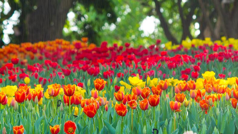 ทัวร์ยุโรป ฝรั่งเศส เบลเยี่ยม เนเธอร์แลนด์ เยอรมัน 8 วัน 5 คืน เทศกาลดอกไม้ ณ สวนคอยเคนฮอฟ พระราชวังแวร์ซายส์ บิน การบินไทย