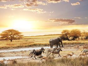 ทัวร์แอฟริกาใต้ โจฮันเนสเบิร์ก 8 วัน 5 คืน ตื่นเต้นกับกิจกรรมส่องสัตว์ซาฟารี  ขึ้นกระเช้าไฟฟ้าขึ้นสู่จุดชมวิว 'Table Mountain' บิน SQ แอฟริกาใต้